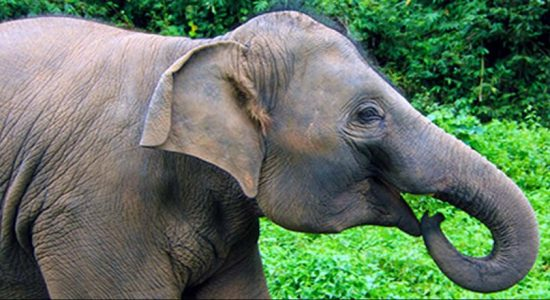 15 year old elephant killed in train accident