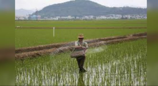 North Korea plants rice as UN warns of food crisis