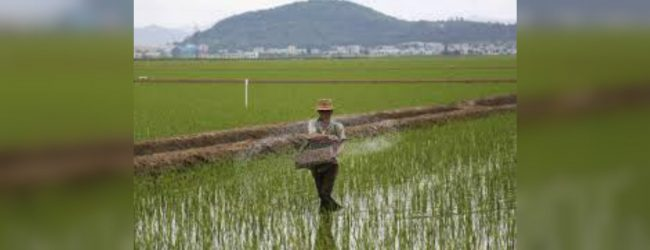 North Korea plants rice as UN warns of food crisis