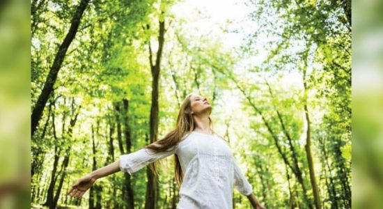 'Forest bathing' – the new health prescription with no side effects