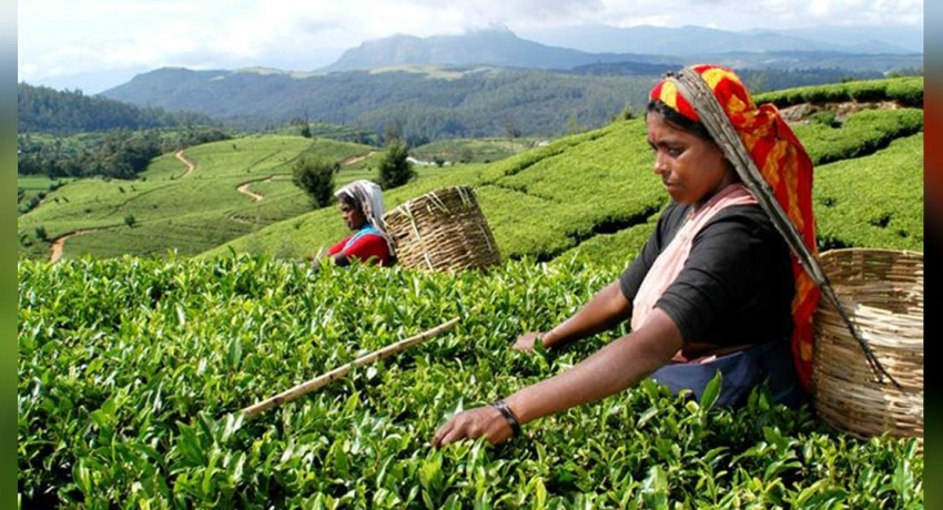 Tea exports unaffected by 04/21 attacks