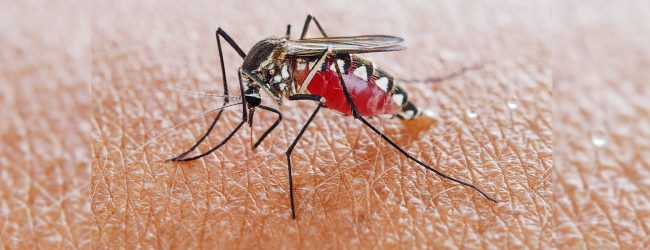 11 malaria patients detected this year