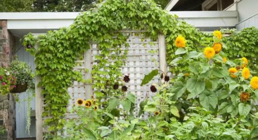 How to Build a Garden Trellis…