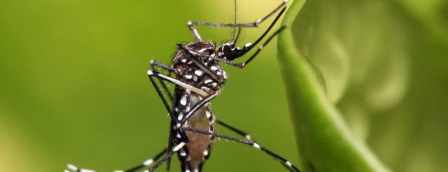 3-day dengue eradication program to commence today
