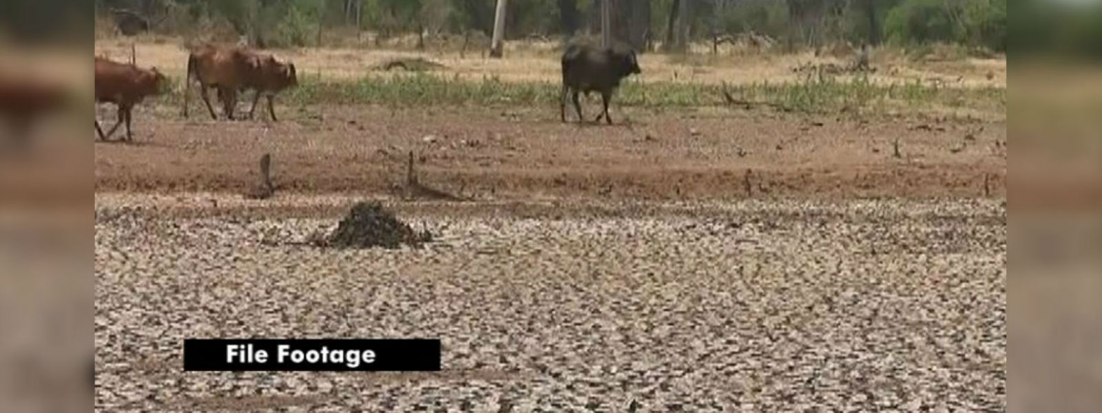 Drought in Northern and Eastern provinces: The challenge is to find drinking water