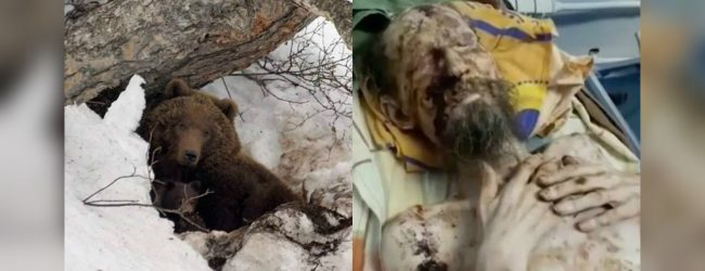BEAR-LY ALIVE Man 'dragged away by a bear is found ALIVE one month later looking like a mummy after being stored inside its den as food'