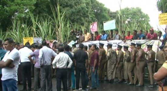 Employees of Sevanagala and Pelwatta Sugar factories protest opposite parliament