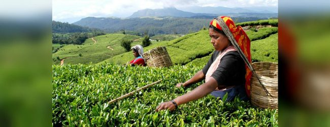 Tea industry is seeing better prospects
