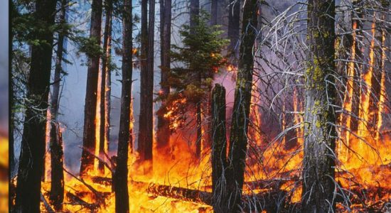 Valuable wood and herbs destroyed due to a fire in Bogahapathana reserve, Wellawaya