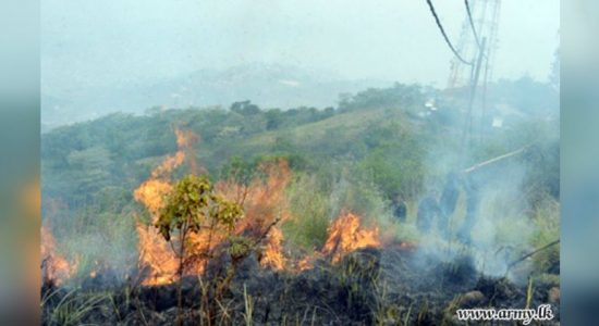 Increase in bush fires in Monaragala and Badulla due to arson