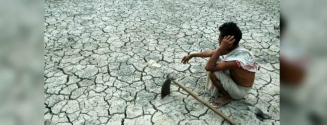 6000 acres of farmlands destroyed by dry weather