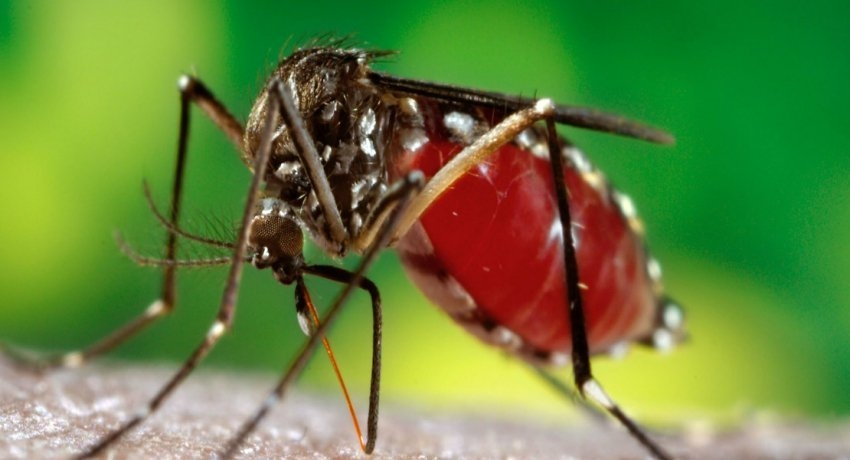 Dengue eradication program for three main districts