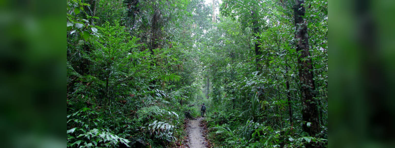 Forest cover goal of 32% : 90,000 hectares allocated for re-forestation