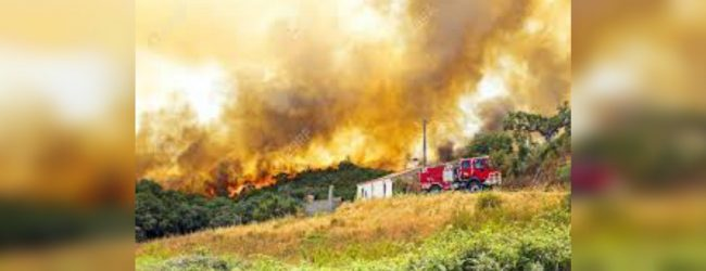 Portugal wildfire threatens homes as firefighters combat flames