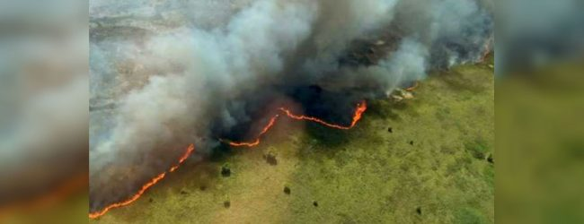 Wildfire damages hundreds of hectares in Mexico UNESCO heritage site