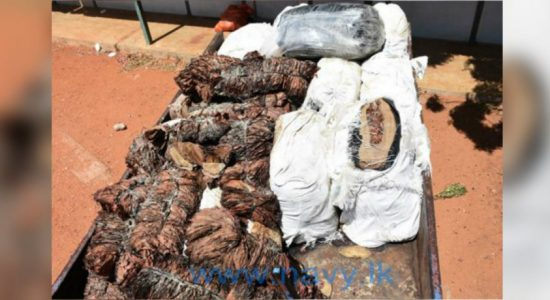 Over 2000 kg of beedi leaves discovered in Navy raids