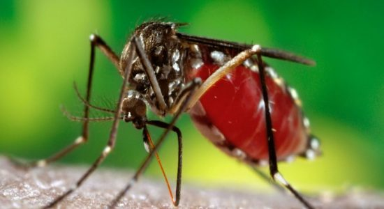 Highest number of dengue patients reported from Colombo district