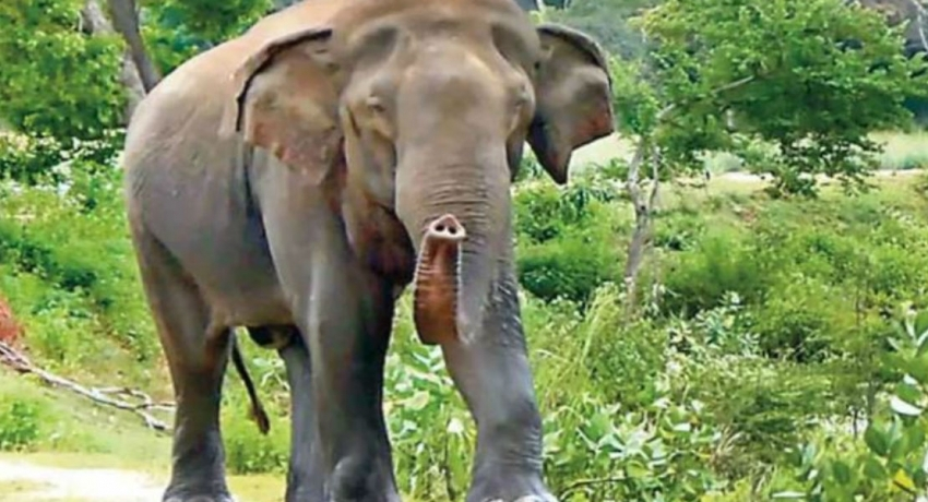 Pallekagama continue to suffer elephant invasions: Countless requests for an electric fence deems futile
