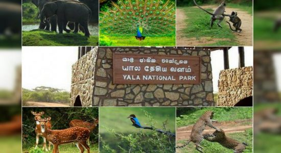 Yala park to be closed for two months from September 1st
