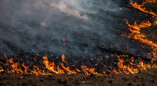 Man-made forest fires on the rise in Monaragala; Ella fire extinguished