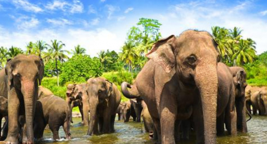 Island-wide census on wild elephants to be conducted