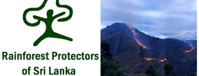Lack of laws in Sri Lanka to confront arsonists – Rainforest Protection Society