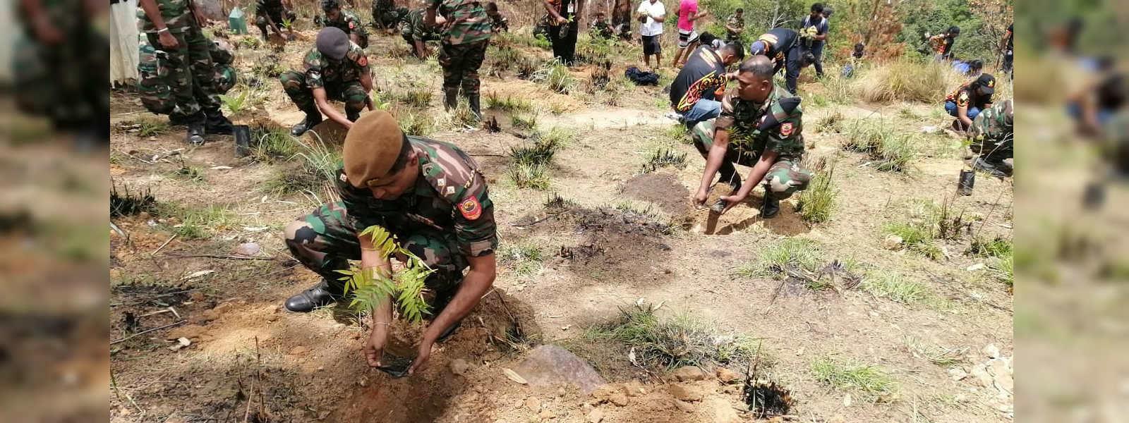Gammadda V-Force to rescue Ella Rock Reserve