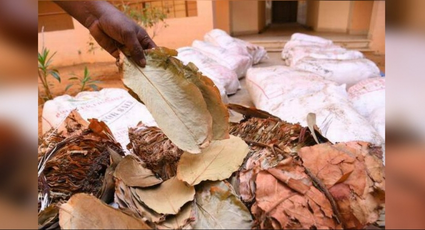 100kg of beedi leaves washed ashore in Iranativu