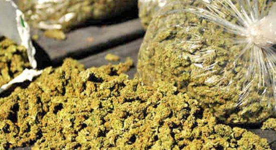 5.5 kg of Kerala ganja seized in Trincomalee