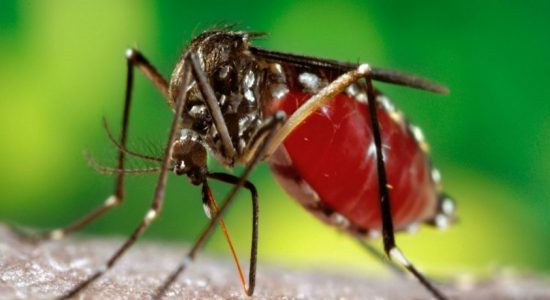 Dengue epidemic in several districts
