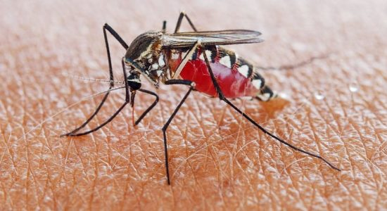 Malaria raising its head in Sri Lanka once again?