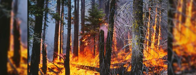 The threat of man made forest fires