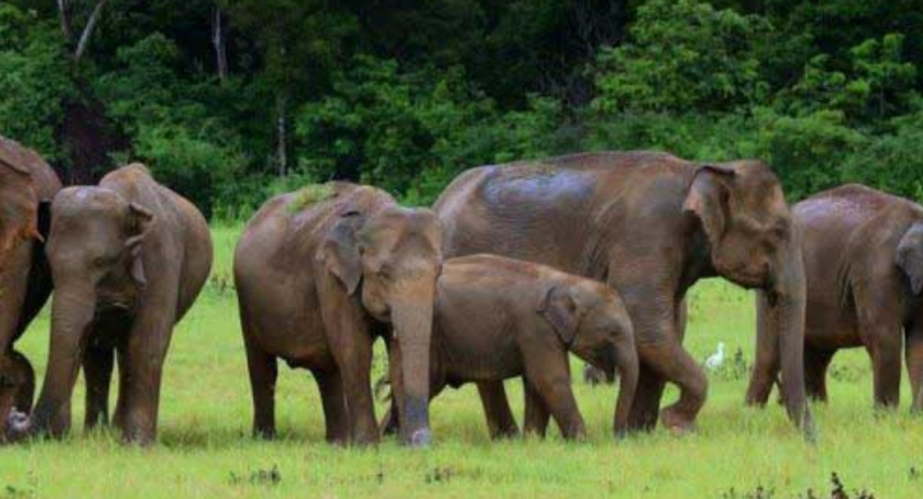 Elephant survey postponed due to rain