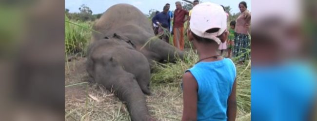 Carcasses of seven elephants discovered; remains to be sent to the Analyst Department