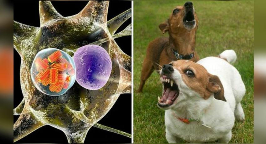 Rabies eradication week begins today