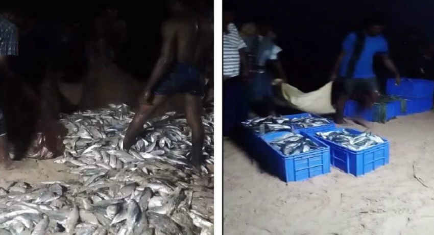 Dead fish washed ashore in Trincomalee