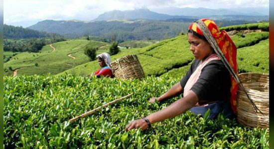 Tea to be exported to Iran: compensate Ceylon Petroleum Corporation debts