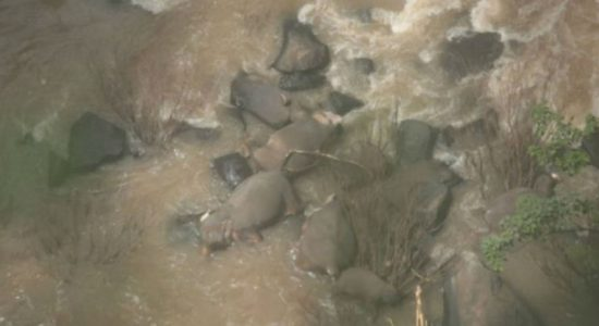 Thailand says 11 elephants killed after falling into waterfall