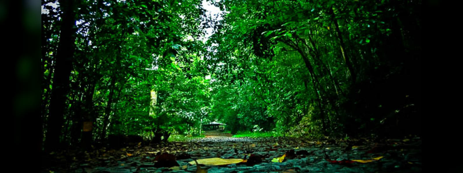 60 forests to be named as forest reserves : Wildlife Conservation Department