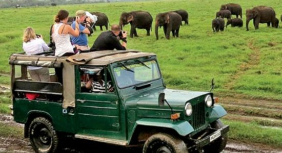 Year on year tourist arrivals show decline : Increasing trends month on month