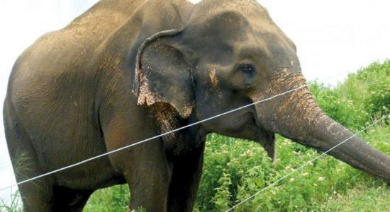 Meenagaya train knocks down three elephants