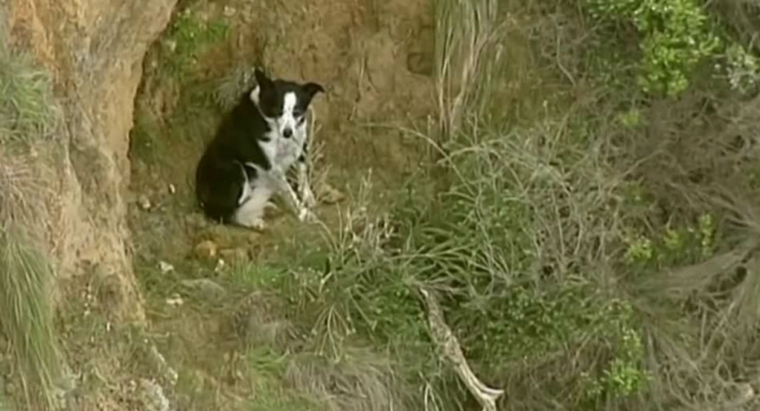 Dramatic three-hour rescue saves Jimmy the dog