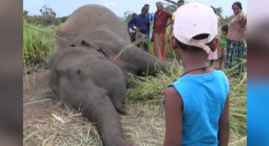 Parts of elephants sent to 3 institutions