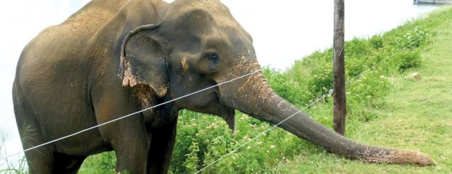 Meenagaya train knocks down three elephants