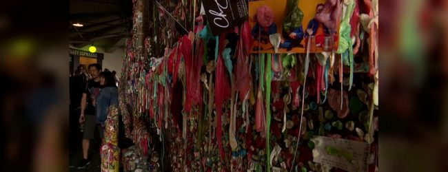Sticky situation: Seattle's 'gum wall' delights and disgusts in equal measure
