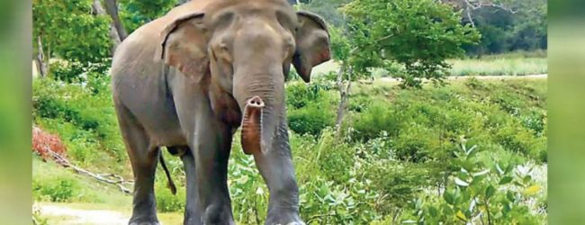 Several villages in a sad plight due to the human-elephant conflict