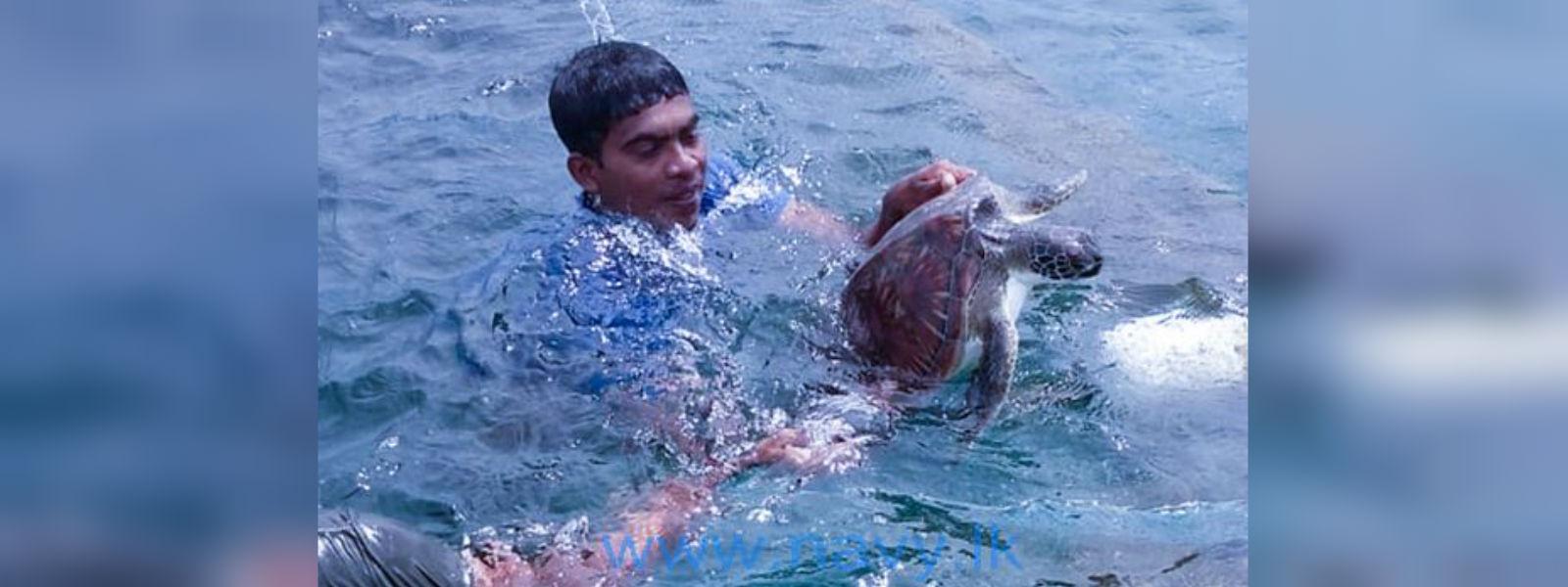 Navy rescues 32 sea turtles in Mannar