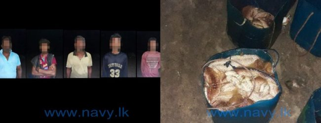 5 arrested with illegally caught sea cucumbers