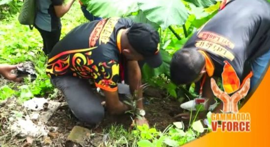V-Force takes on project to plant 1000 trees along the Kalu ganga