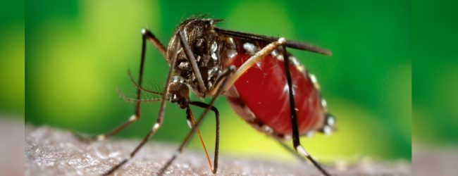 Dengue epidemic spreads with prevalent rains